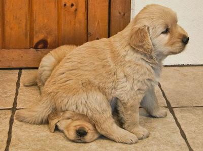 你們這些壞狗狗,不要亂欺負同伴啦!