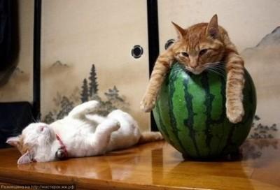 貓咪們的避暑妙招,還是躲這最涼喵