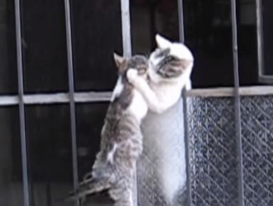 小貓爬不進去,心急貓媽媽隔窗救援