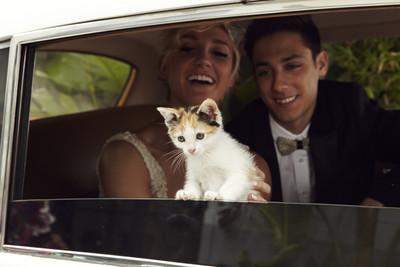 最萌嘉賓!9隻小貓現身愛喵新人婚禮