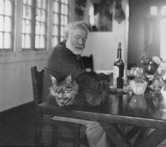 海明威六趾愛貓的子孫們,現在在哪呢