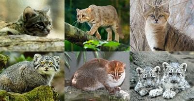 即將消失的23種大貓 求你們別離開QQ