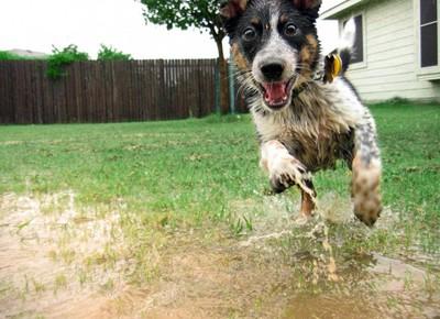 15個狗狗的生活態度,我們都該學學