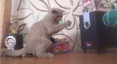 喵星人v.s低音喇叭,看我貓爪抓節奏!
