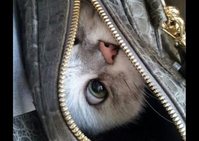 喵星人貪玩躲貓貓…差點就被揹回家!