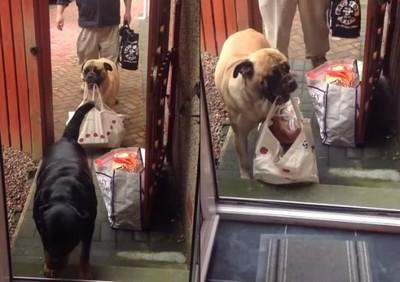 噢主人那行李太重了,我來幫你提~汪
