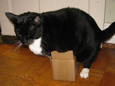 喵星人OS:以前明明能擠進這箱子啊..