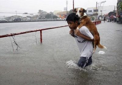 拯救動物的雙手 感謝你當牠們的英雄