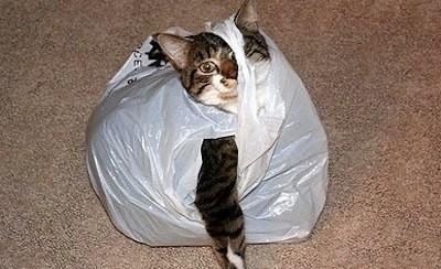 不只紙箱,連塑膠袋都是喵喵的好玩具