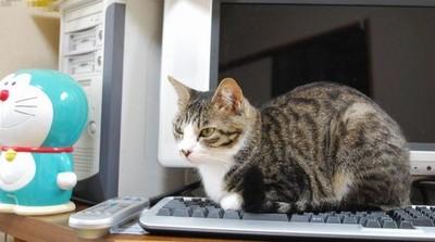 看人打字好有趣!貓咪霸佔鍵盤3理由