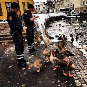 冰島警察萌萌噠,鐵漢柔情一定要的♥