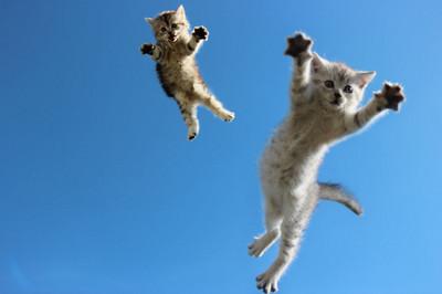看我喵喵拳!貓咪跳躍瞬間根本武打片
