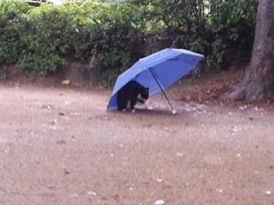 雨中留一把傘…讓流浪貓也能等雨停♡