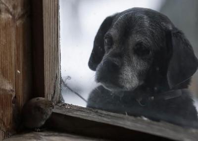 你在看啥呢?望向窗外的毛孩簡直賢者