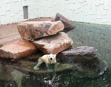 樂園工作北極熊,每天4件事討人歡心