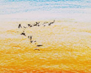 最自然的翱翔候鳥…全靠一個橡皮擦!
