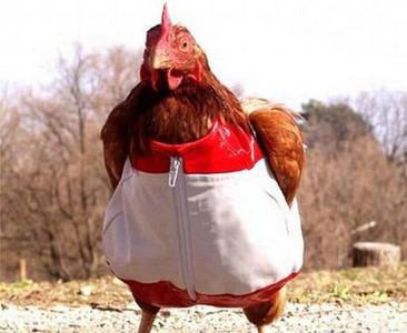 家裡養的雞跑出去聯誼了啦,對象是…