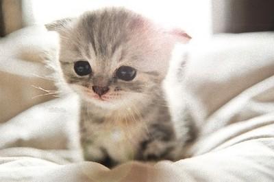 你很瞭喵星人?挑戰13隻幼貓的年齡QA