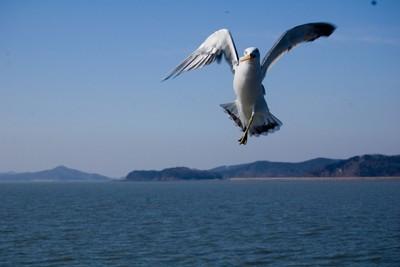 抓小偷!海鷗叼走我的冰淇淋ㅠ ㅠ