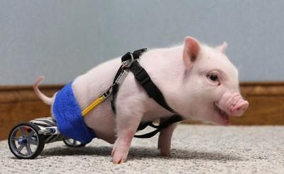 15隻殘缺動物,裝上義肢後擁抱新生命