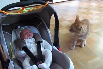 喵初見嬰兒感想:怎麼會動,快逃唷~