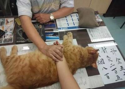 貓咪中醫助理,軟軟貓肉墊好舒服呀