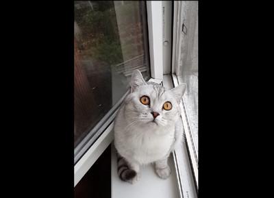 萌貓到底在看什麼…跪求鍵盤柯南解答