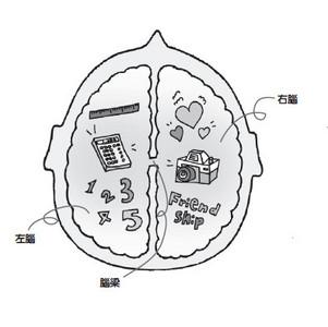 創意發想與情感重視來自右腦發展
