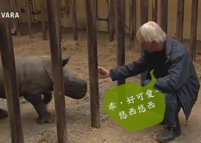 犀牛寶寶也要好好關進籠子…OMG!