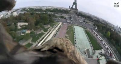 機會難得,讓白尾海雕載你俯視巴黎