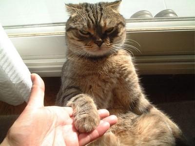喵星人:朕才是王!18件貓奴會懂的事