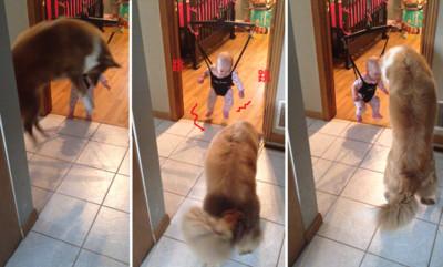 起跳預備備!狗狗&嬰兒樂玩踩影子