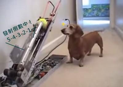 狗狗也能操作的丟球機!停不下來啊汪