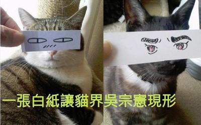 一秒讓你笑出來!小紙條讓貓咪變諧星