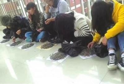 學生嗑瓜子 師買30斤罰他們嗑光