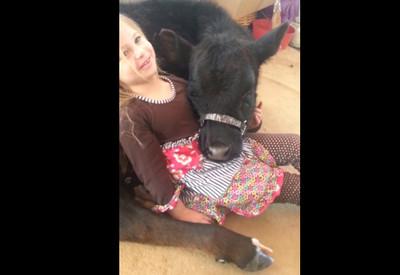小女孩想養牛當寵物,媽媽看了好為難
