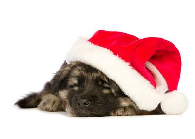 聖誕老公公別讓女孩不開心,她要狗狗