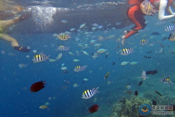 全世界最棒島嶼「巴拉望」跳島遊 這才叫人間仙境!