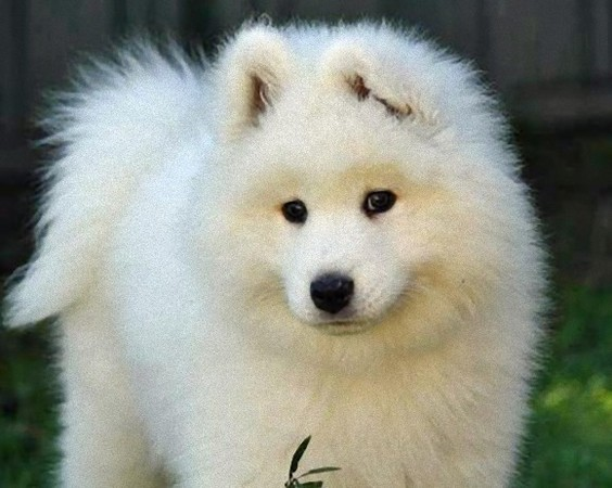 Polar Dog Breeds