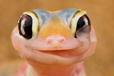 別討厭爬蟲類嘛,你看牠對著你笑耶:D
