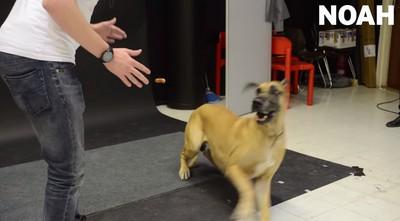 熱狗在眼前漂浮,優雅大狗嚇到逃跑