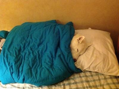 毛小孩占床睡大頭覺,這裡沒你的位子