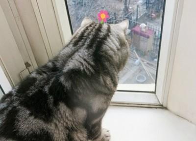 貓咪盯著窗外,靠近一看…都要掉淚了
