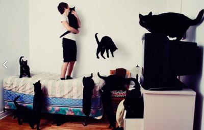 填滿每寸空間,歡迎來到貓咪狂熱天堂