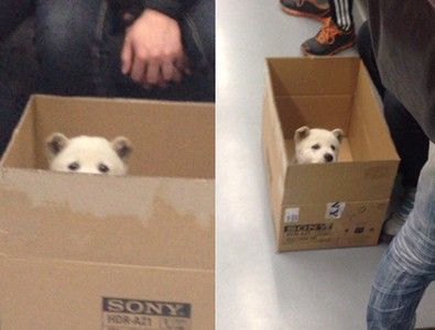 你在看我嗎?小狗搭地鐵什麼都好神奇~