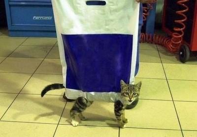 貓咪畢生宿敵/夥伴,就決定是袋子了