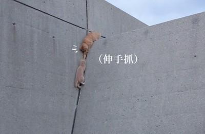 小貓爬高牆,大貓伸手幫..啊咧不是嗎