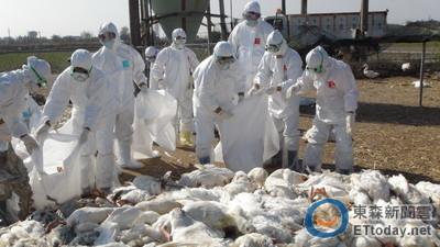 染H7N9台商病毒變種! 疾管署急投「伊波拉解藥」救命