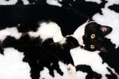 與毛小孩來場超級躲貓貓,要找到唷~