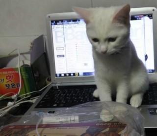 喵咪的堅持…給我炸雞,才給你玩筆電